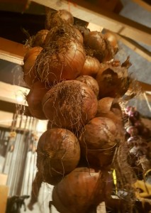 Stored Onions